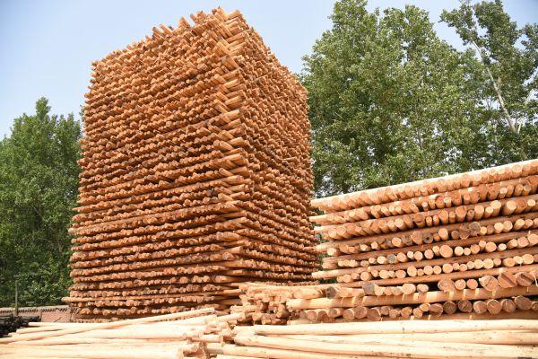 防腐木杆原材堆放场
